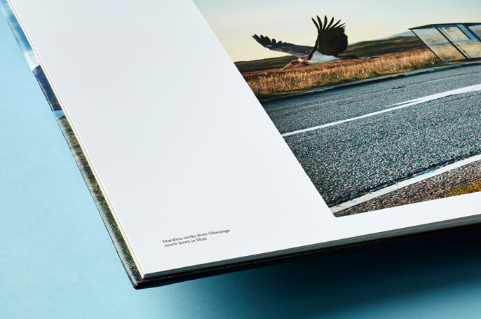 Translocation book spread - Flying stork