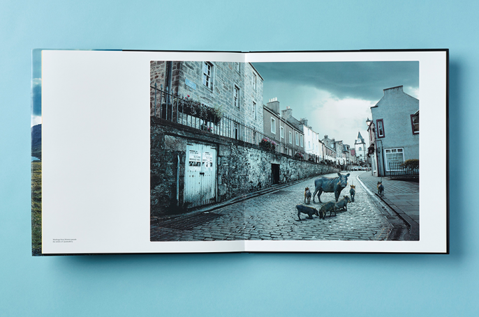 Translocation book spread - Wildlife in the street